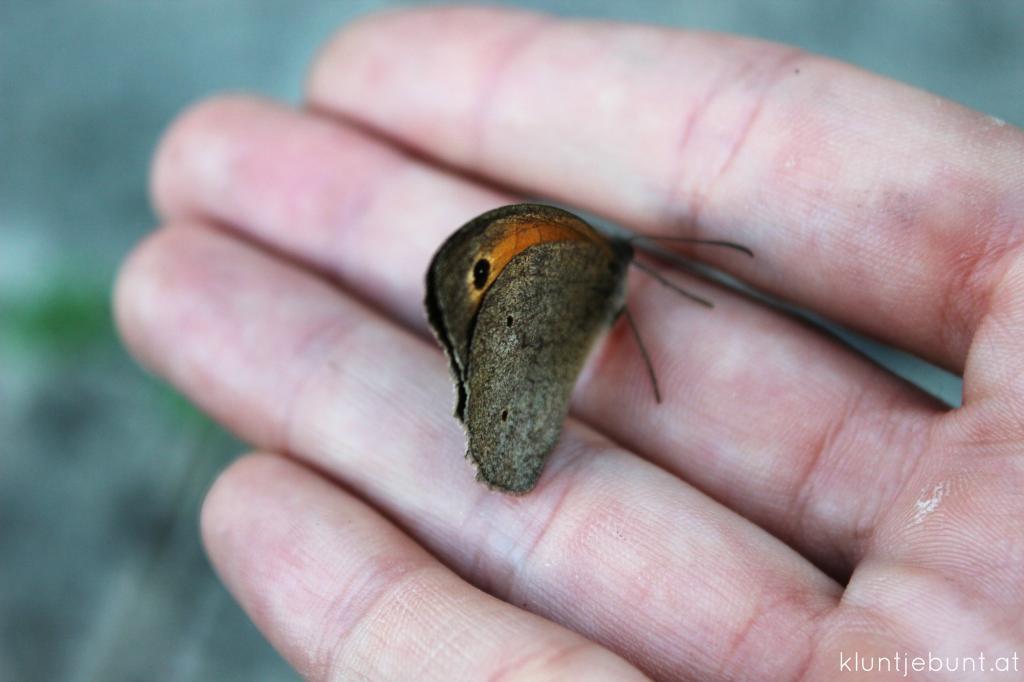 Schmetterling Makro Aufnahme mit Canon 600D.